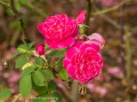 20130615_Zilker_Gardens_085