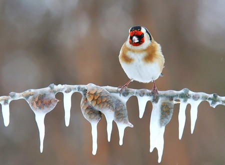 How do birds survive the winter?
