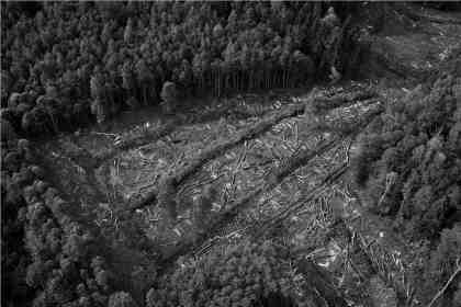 Wald-by-TiM-Caspary-416857-pixelio.de