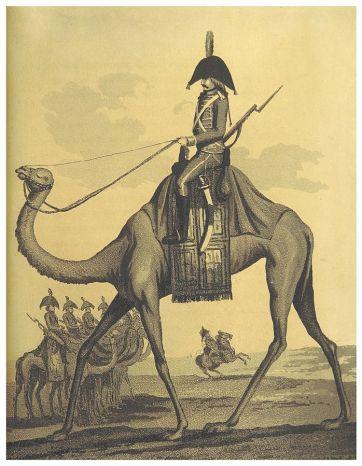 Les dromadaires de l'armée d'Egypte du général Napoléon -gregory-roose-chroniques-remplacisme-global-grand-remplacement
