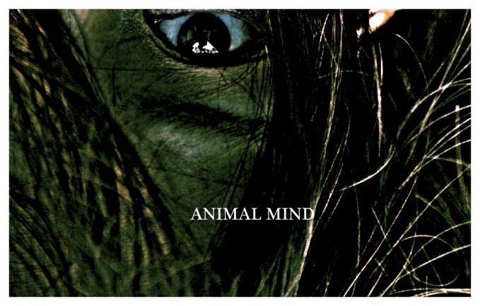 animal mind 00