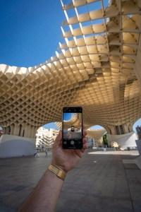 Champignon Seville