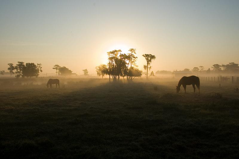 Sunrise in Lithia, FL