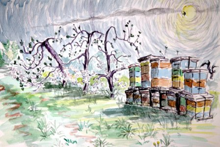 Bee Hives 1