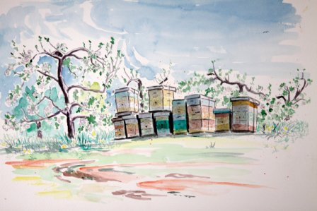 Bee Hives 2