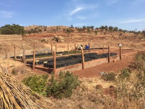 Tree Nursery in Malawi, created with support from Nyala Mine and Columbia Gem House.