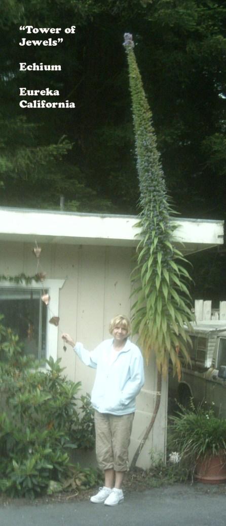 tower-of-jewels-eichium-plant-eureka-ca