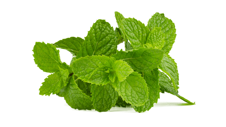 mint leaves for face pack