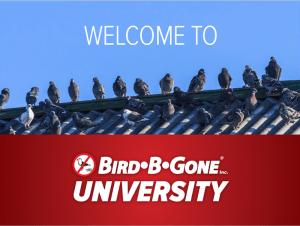 marketing bird control