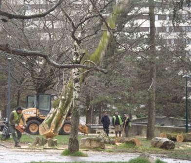 l'abattage final d'un des 9 arbres place Charles Dullin