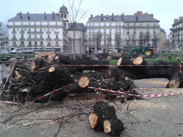 On se souvient du spectaculaire hécatombe de marronniers place Victor Hugo