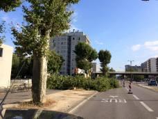 65 platanes en juillet 2016 cours de la Libération