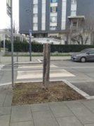 Pendant qu'E Piolle fait sa promo il manque des dizaines et des dizaines d'arbres depuis des années partout dans Grenoble: Teissiere rue Paul Cocat,