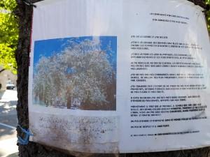 Un grenoblois avait affiché la complainte du cerisier avant que celui-ci ne soit abattu
