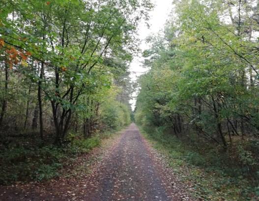 De grensweg door de Groote Heide