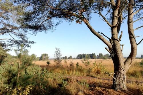 Fietsend langs het Leenderbos