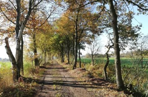 Bij de grens richting de Groote Heide, aan de Belgische kant