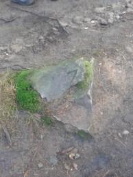 Stein mit Teil einer Wolfsangel zu sehen