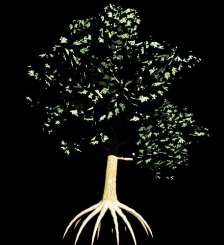 Free tree and plant models at XFrog