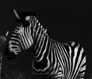 Creating a Zebra poster using DAZ Studio and Photoshop