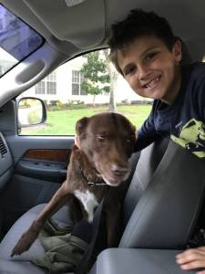 Pawboost reunites boy with dog