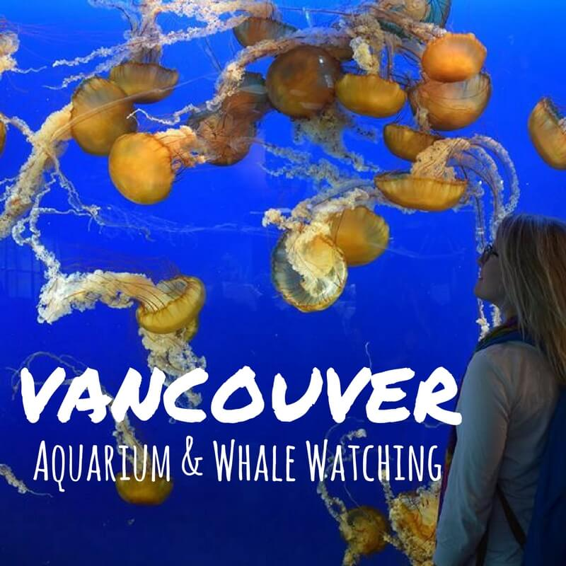 Whale Watching & The Vancouver Aquarium