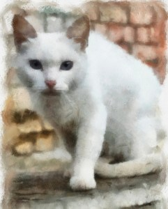 illustration, white cat