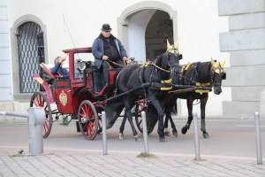 Horse-drawn tour of the city