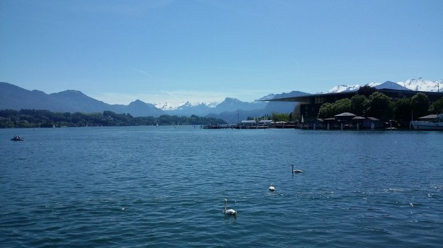 Lake Luzern, swans, mountains