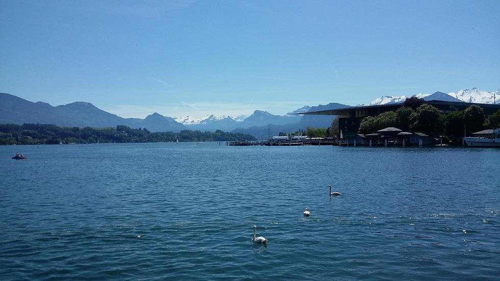 Lake Luzern, swans, mountains