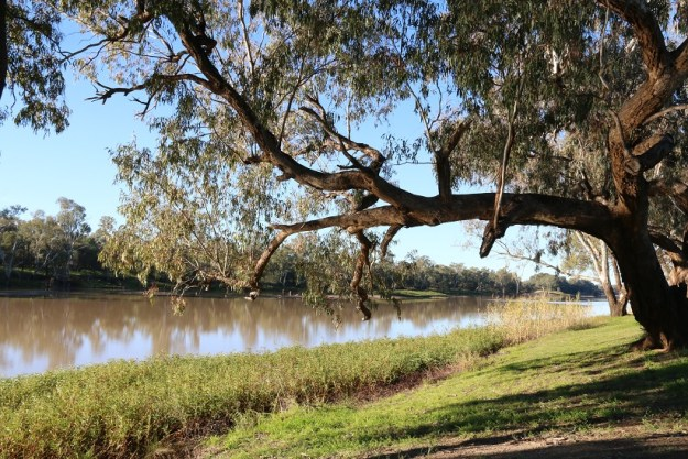 The Balonne river at St George. It's a part of the Murray-Darling system