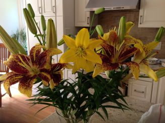 yellow lilies 2014