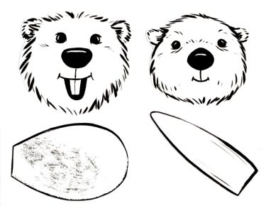 Beaver and Otter heads and tails
