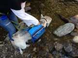 taking off his pack to go in the water!