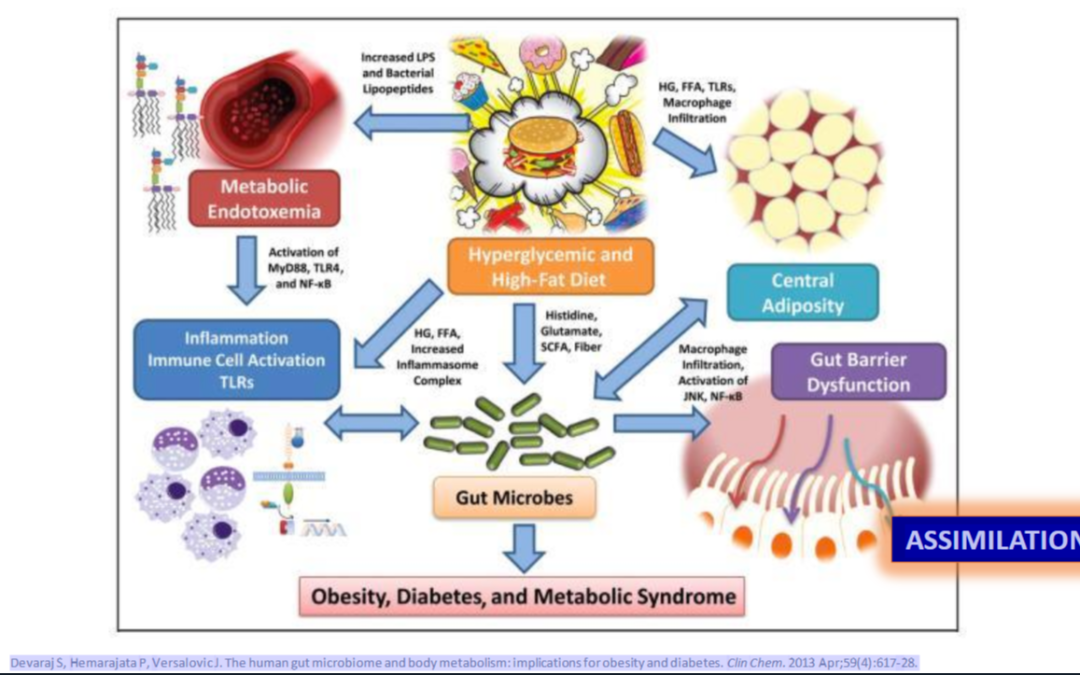 What I Tell My Patients About Metabolic Syndrome?