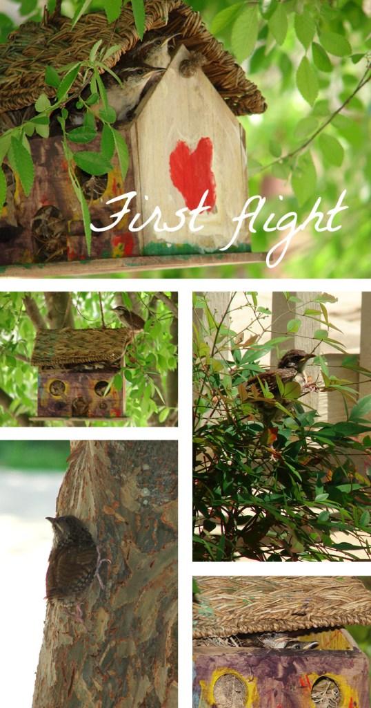 Baby birds first flight from homemade bird house.