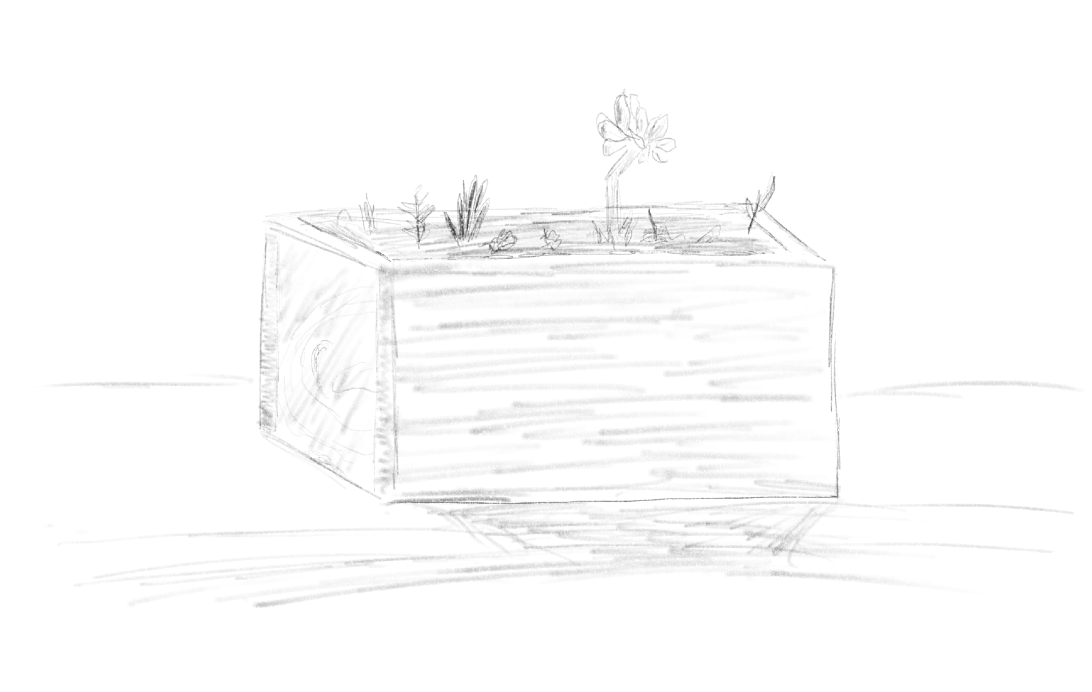 Sketch of a rectangular wooden planter. A few succulents are growing in the planter.