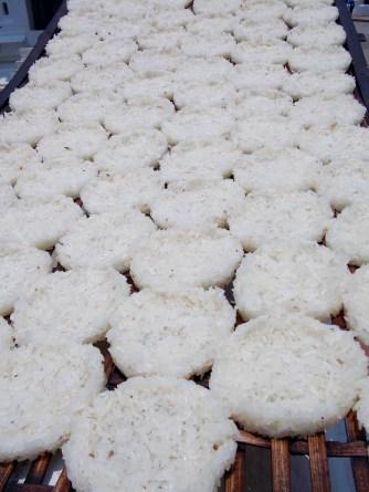 Rice patties drying in the sun