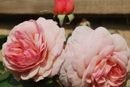 July Garden2