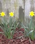 Spring's hope eternal