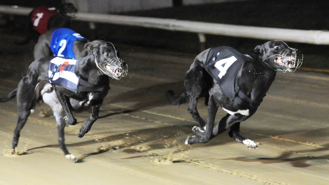 Henlow Archives Greyhound Star News From The Greyhound Industry