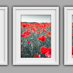 Poppy Art Collection