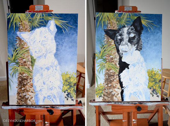 wpid2316-pet portrait  |  greyhouseharbor.com-progression-6.jpg