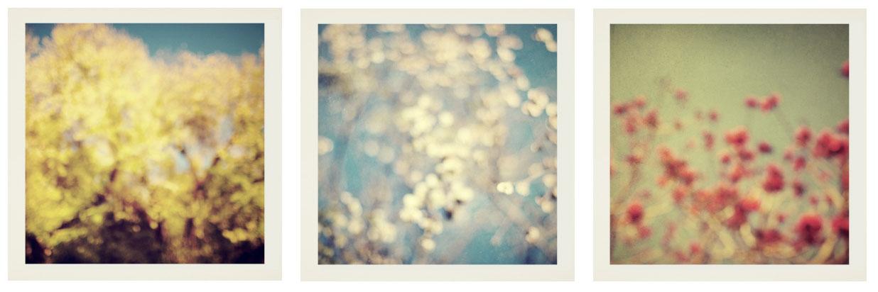 blurrynature