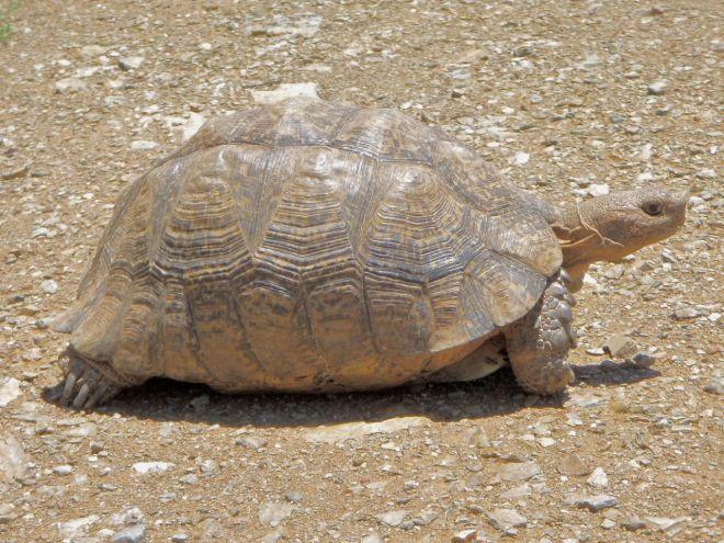 Vlou interessiert sich mässig für die Schildkröte