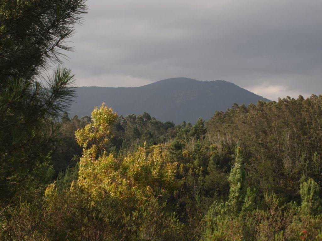 Marcelle's Südafrika Rundreise Erfahrungen mit Land Rover, Wohnwagen und Hund. Einzigartige Erlebnisse, oft wunderschön, manchmal grenzgängig, hier mit Informationen zum Outeniqua Pass, dem Outeniqua Hiking Trail und Outeniqua Hiking Trail Map.