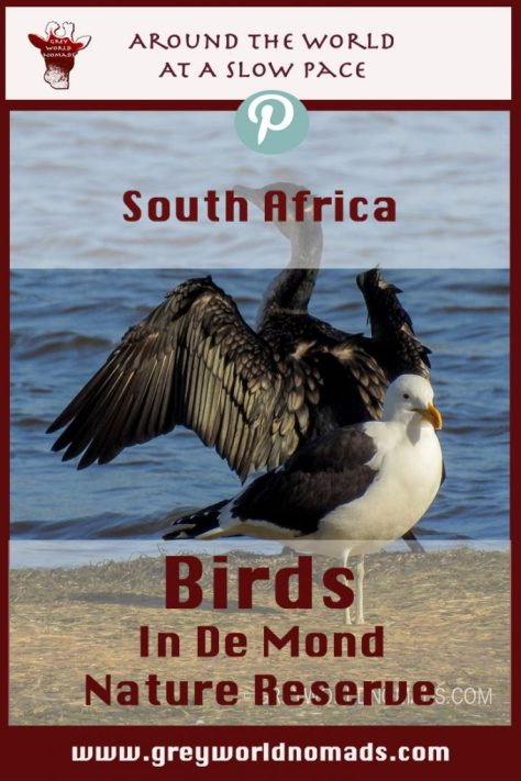 Birding enthusiasts find a paradise in De Mond Nature Reserve near the most southern point of Africa.