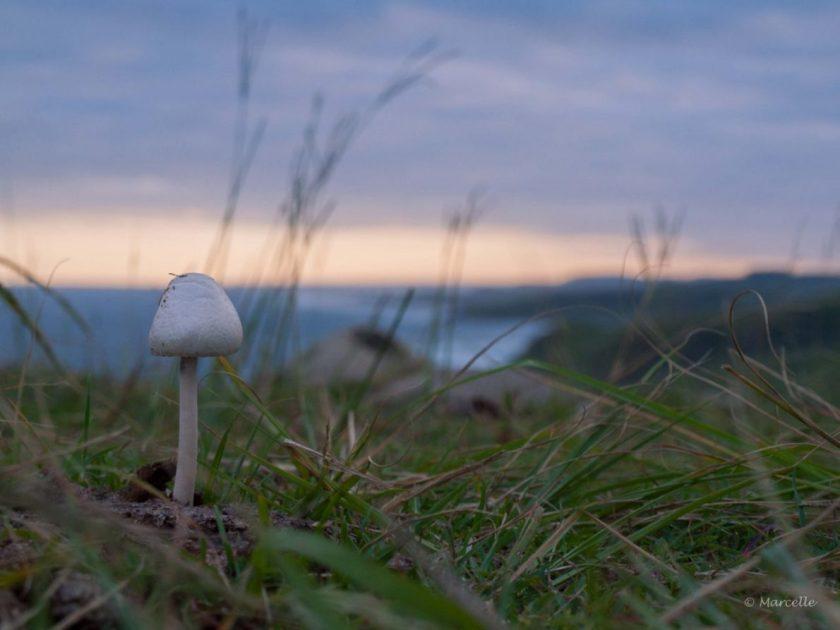 Mushroom, Morgan Bay, South Africa