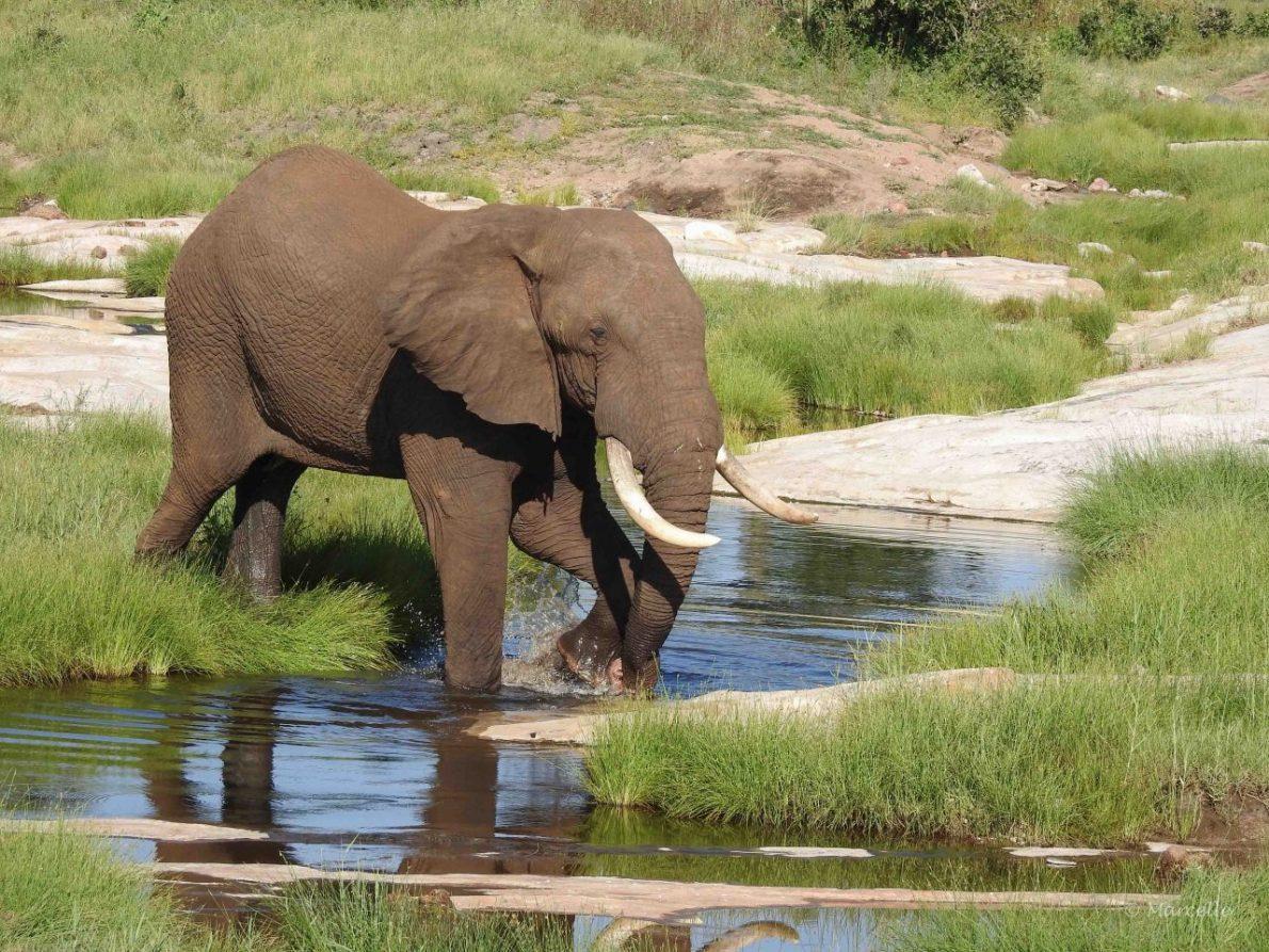 Dusty elephant near Phalaborwa, Kruger National Park, South Africa