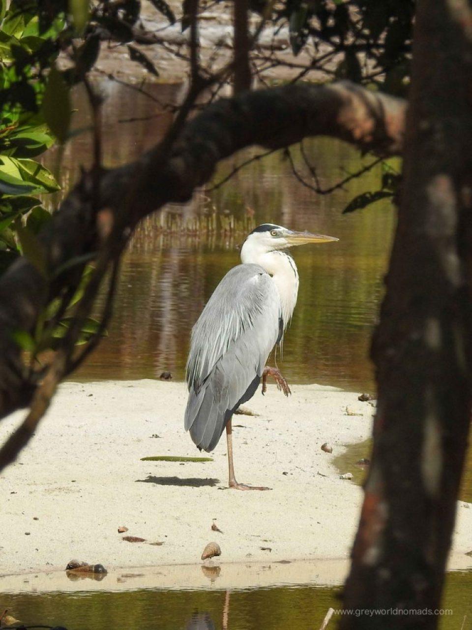 ile curieuse seychelles, curieuse marine national park